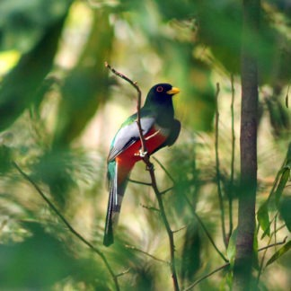 Nicaragua Birding