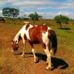 Nicaragua Horse Tours